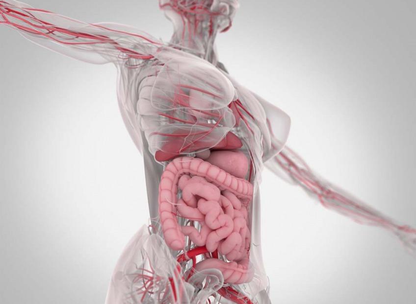 <b>Mikrobioms. Ciešās saiknes</b>